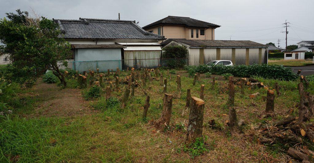 裏の木の伐採DSC02187