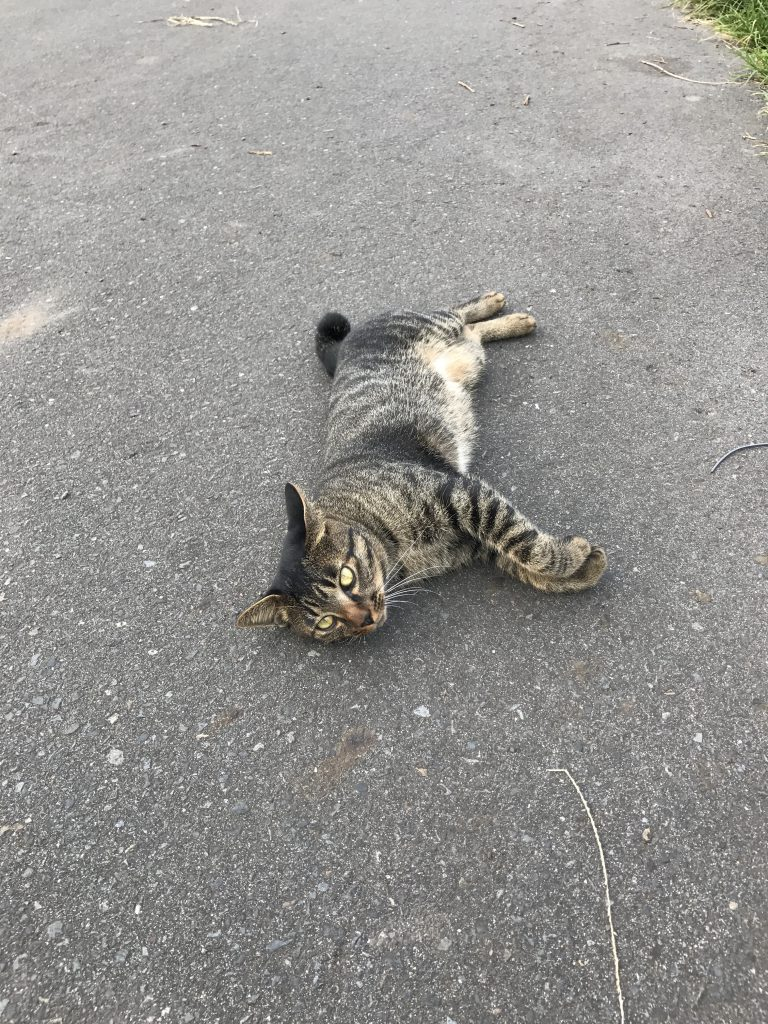野良猫が松