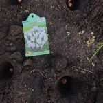 週末田舎暮らし 週末家庭菜園  11/20 今回は植木の伐採の手伝い