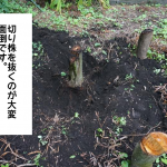 木の根、切り株処分、枯らすか、穴掘り引っこ抜くか