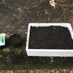 家庭菜園 2018/03/04 灰を撒くほうれん草のタネさつまいもの蔓苗