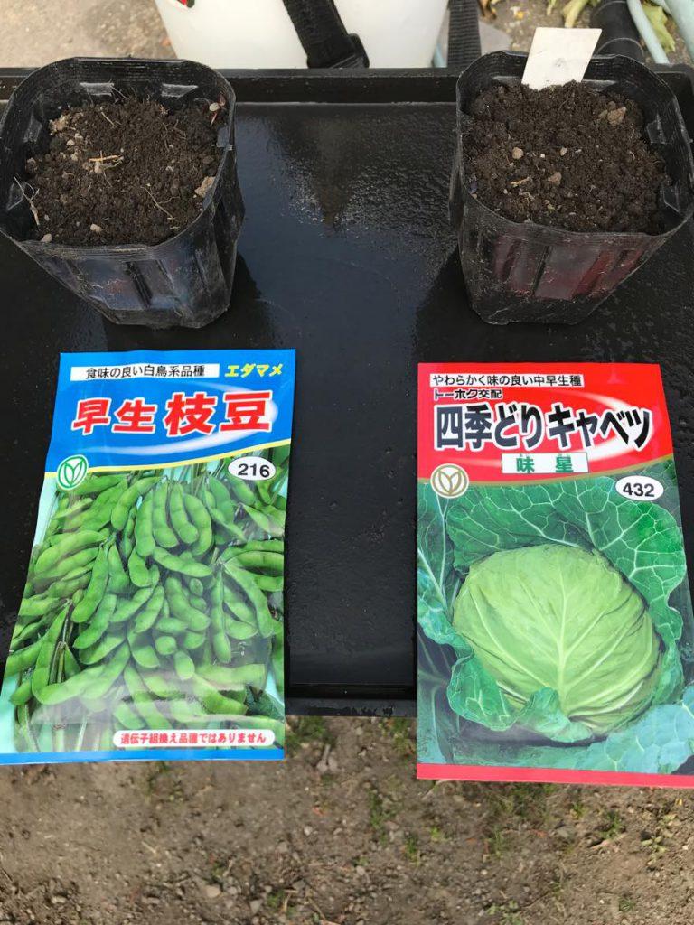 枝豆とキャベツ