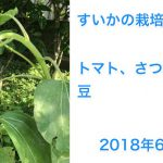 今年はスイカの栽培は諦めた2018/06/23