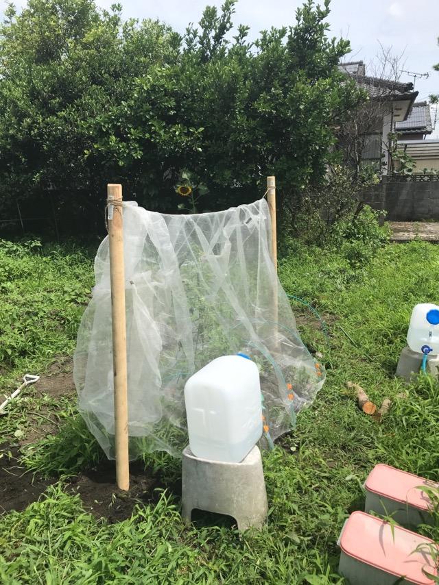 トマト栽培害虫ネット