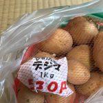 家庭菜園 じゃがいも 玉ねぎの種 チューリップの球根を買った、雨で寒い2018/09/08